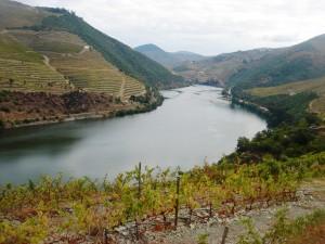 Vignoble de la Vallée du Douro